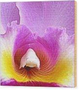 Hawaiian Orchid 9 Wood Print