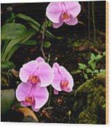 Hawaiian Orchids Wood Print