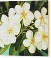 Hawaiian Plumeria #56 Wood Print