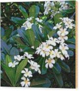 Hawaiian Plumeria Wood Print
