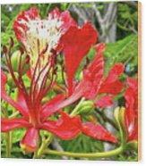 Hawaiian Royal Wood Print