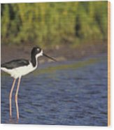 Hawaiian Stilt Bird In Water Wood Print