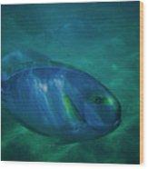 Hawaiian Tang Fish Wood Print