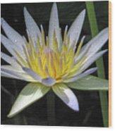 Hawaiian Water Lily 05 - Kauai, Hawaii Wood Print