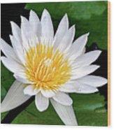 Hawaiian White Water Lily Wood Print
