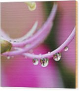 Hawaiin Rain Drops Wood Print