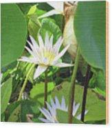 Hawiian Water Lily 01 - Kauai, Hawaii Wood Print