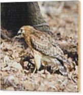 Hawk And Gecko Wood Print by George Randy Bass