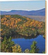 Hawk Eye View Wood Print