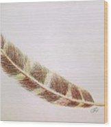 Hawk Feather Wood Print
