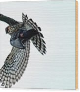 Osprey Flying Away With Prey Wood Print