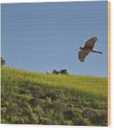 Hawk Flying Over Field Of Yellow Mustard Wood Print