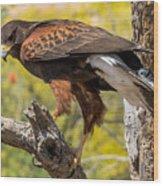 Hawk In A Tree Wood Print