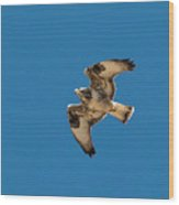 Hawk In Flight Wood Print