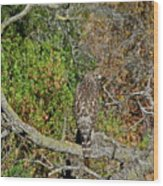 Hawk In Hiding Wood Print