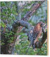 Hawk In Sunlight Wood Print