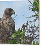 Hawk In The Tree Wood Print