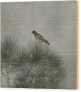 Hawk In The Treetop Wood Print