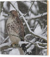 Hawk In Winter Wood Print