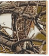 Hawk King Outside My Window Wood Print