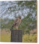 Hawk On A Fence Post Wood Print