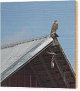 Hawk On The Barn Wood Print