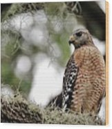 Hawk On Watch Wood Print