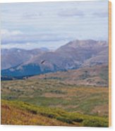 Hawk Soaring Over Guanella Pass In The Arapahoe National Forest Wood Print