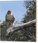 Hawk's Perch Wood Print