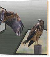 Hawks Wood Print
