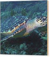 Hawksbill Sea Turtle 3 Wood Print