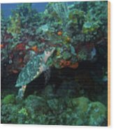 Hawksbill Sea Turtle 4 Wood Print