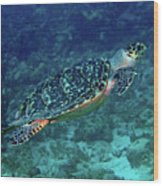 Hawksbill Sea Turtle 5 Wood Print