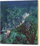 Hawksbill Sea Turtle 7 Wood Print
