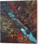 Hawksbill Sea Turtle 9 Wood Print