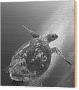 Hawksbill Turtle Ascending Wood Print by Steve Jones
