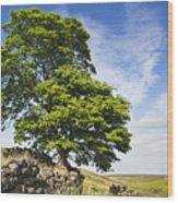 Haworth Moor Sycamore Wood Print