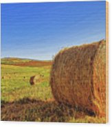 Hay Bales Wood Print by Dominic Piperata