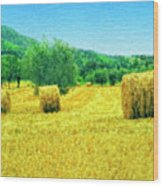 Hay Harvest In Tuscany Wood Print