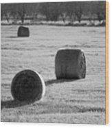 Hay Is For Horses Wood Print