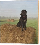 Hay There Black Dog Wood Print