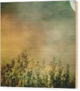 Haze On Moonlit Meadow Wood Print