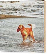 hd 342 Frisbee Dog hdr Wood Print
