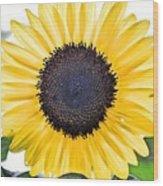 Hdr Sunflower Wood Print