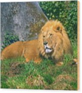 He Lion Wood Print
