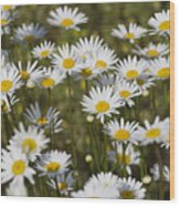 He Loves Me Daisies Wood Print