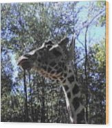 Head Giraffe Wood Print