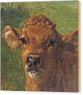 Head Of A Calf Wood Print