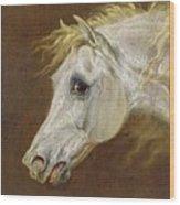 Head Of A Grey Arabian Horse  Wood Print