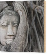 Head Of Buddha Statue In The Tree Roots Wood Print